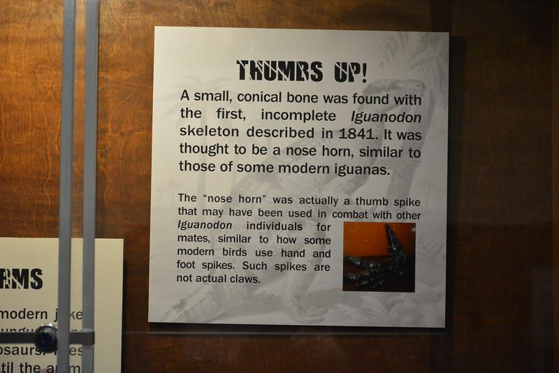 Iguanodon thumb spike sign