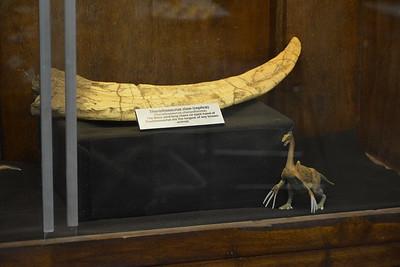Therizinosaurus claw