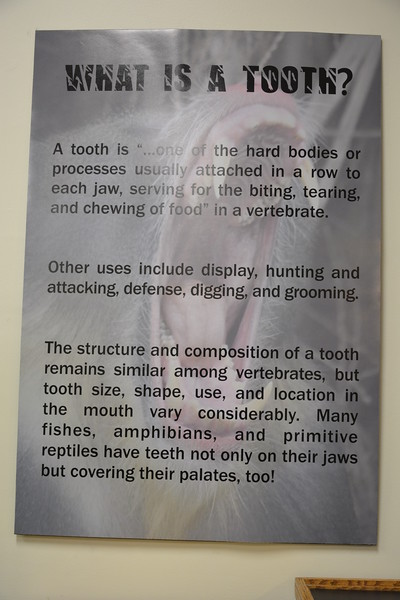 What is a tooth?