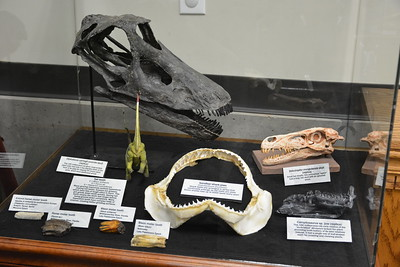 Second impressive animal teeth display, close-up