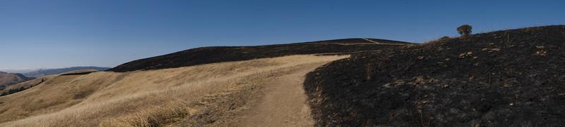 Looking north along Ridge Trail, after burn.