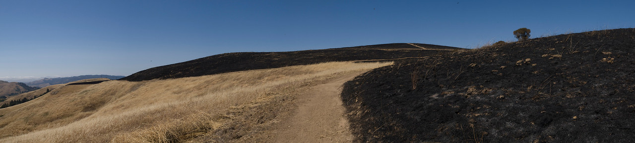 Looking north along Ridge Trail, after burn.