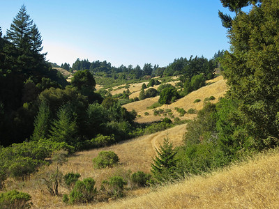 Bay Area Ridge Trail from Peters Creek Trail, Long Ridge OSP.
