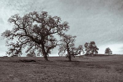 Arastradero Oaks