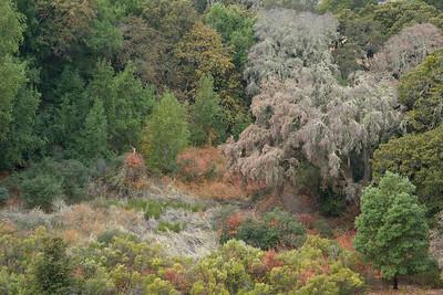 Los Trancos OSP, Page Mill Trail, foliage