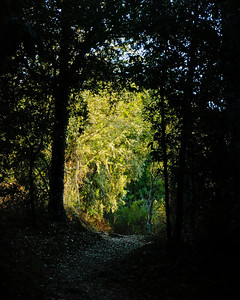 Sun and shadow on the Franciscan Loop Trail at Los Trancos OSP