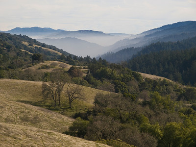 Monte Bello OSP, Nature Trail, looking down Stevens Creek Canyon
