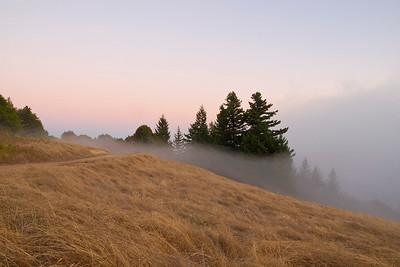 Low-lying fog flows in, Long Ridge OSP.