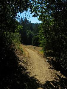 Along Peters Creek Trail, Long Ridge OSP.