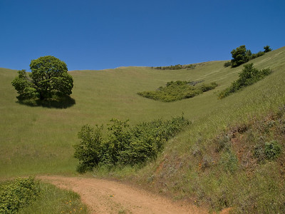 SF Peninsula Open Space Landscapes