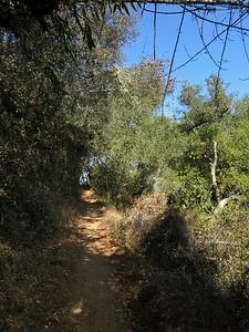 Foothills Park (Palo Alto), Los Trancos Trail.