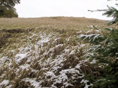 Los Trancos OSP, Page Mill Trail, snowy grassland, 8 Dec 09