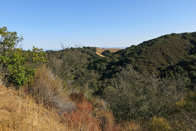 Foothills Park (Palo Alto), view looking east towards Mt. Diablo from Los Trancos Trail.