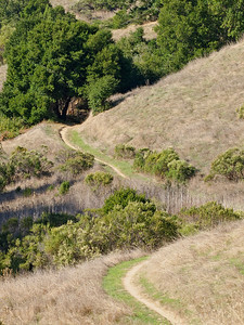 Bay Area Ridge Trail in northern part of Long Ridge OSP