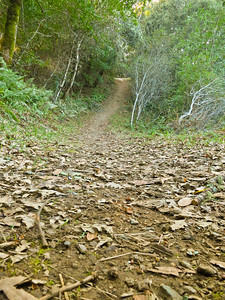 Franciscan Loop Trail at Los Trancos OSP.