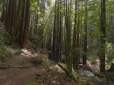 El Corte de Madera Creek at the Methuselah Trail crossing (ECdM OSP), 30 March 2011