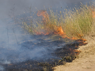 The fire consumes harding grass (that was one of the main purposes of the burn).