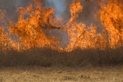 Flames consume the grassland at Russian Ridge Open Space Preserved during a prescribed burn.