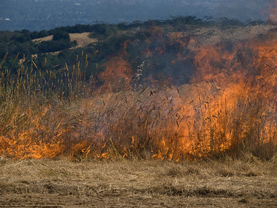 The next few photos show some of the most intense fire, which took place in taller grasslands.  Note the distortion of the image above the fire, due to temperature-driven variations in the refractive index of the air.
