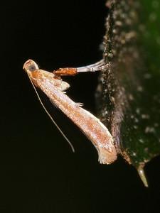 Moth at Filoli.