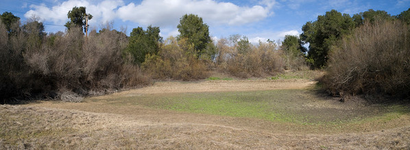 Sobey Pond at Arastradero Preserve, dry as a bone on 10 February 2009.