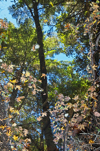 Trees and leaves, Peters Creek, Long Ridge OSP.