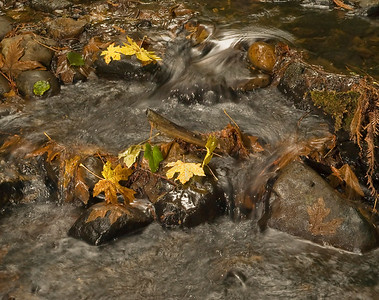 Water, stones, leaves.   Purisima creek.