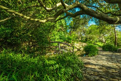 Moon bridge under a Crape Myrtle Tree.