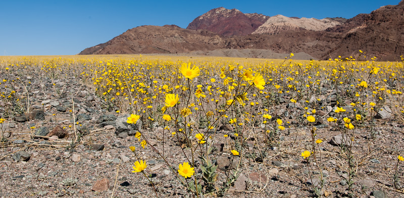 Death Valley Spring