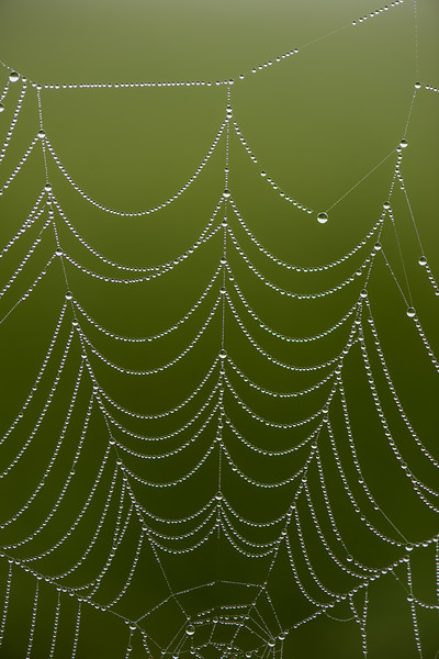 Pearls on Spider Web