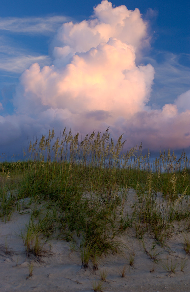 sea oats morning avon 1