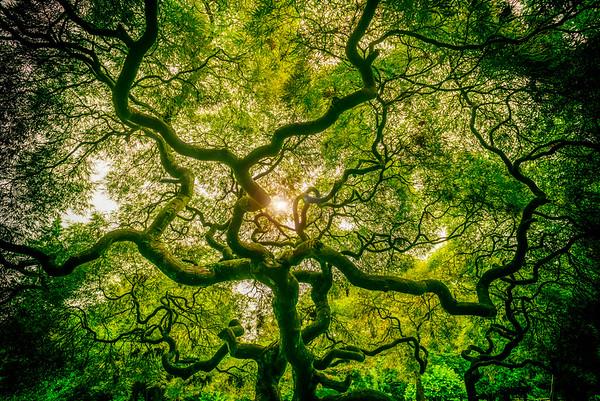 Tree of Life, Valley Garden Park, Greenville DE, 2014.