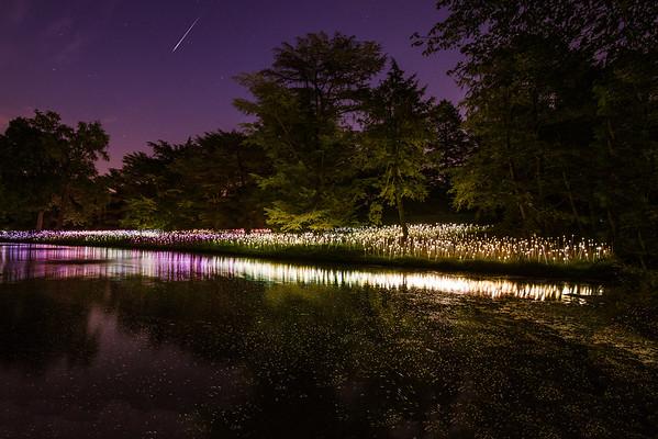skyLIGHT, Longwood Gardens, Longwood, PA 2012.