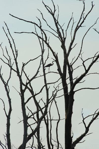 Skeleton, Bombay Hook, Smyrna DE, 2010.