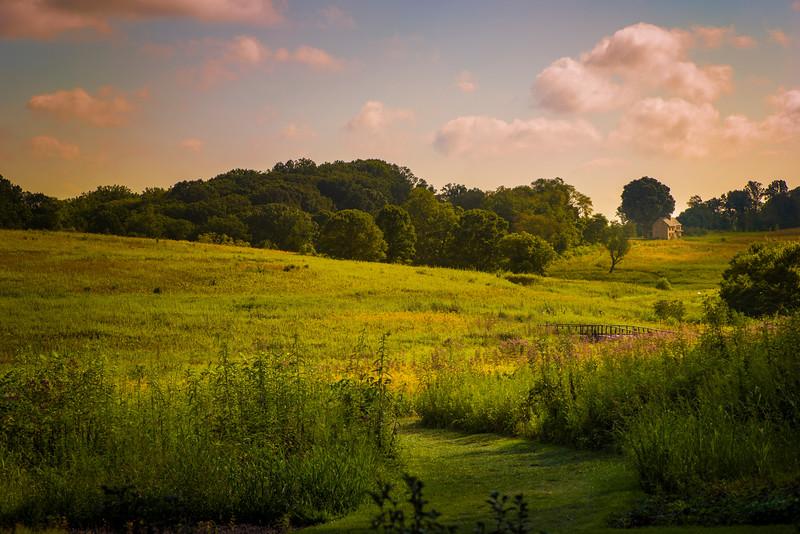 Meadow, Longwood Gardens, Longwood PA, 2014.
