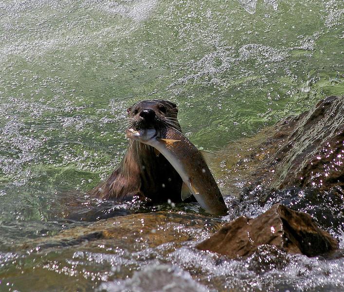 Lunchtime, Teton National Park