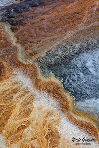 Yellowstone National Park.  Wyoming, USA