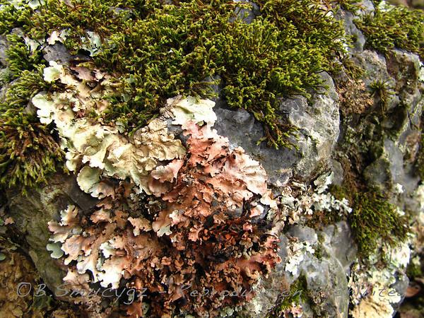 Nature Up Close