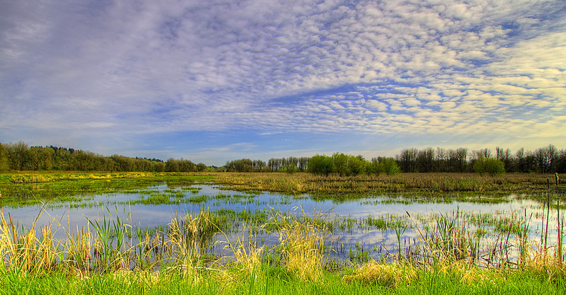 """Ridgefield NWR. Unfortunately this HDR picture has a lot of """"noise"""" in the foreground due to the wind moving the grass."""