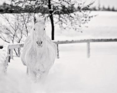 Snow Horse