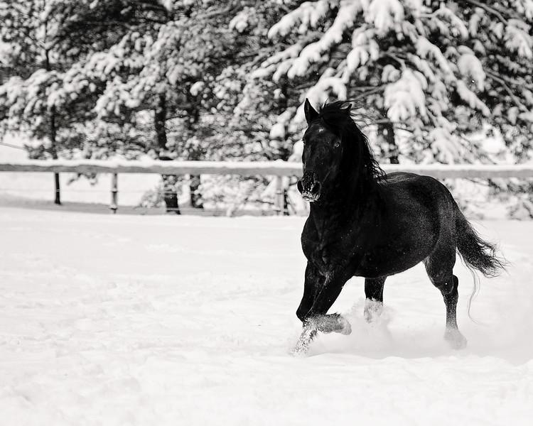 Black horse in snow
