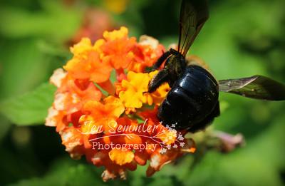 09 01 13 bee 2