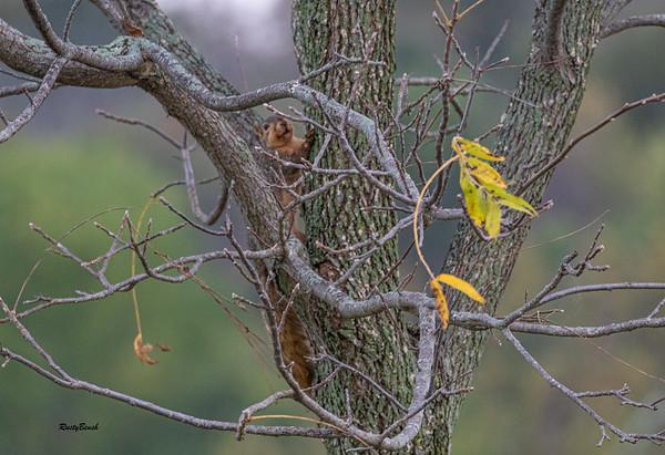 11OCT19 Squirrel-3