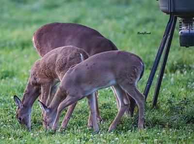 24SEPT21 deer-16