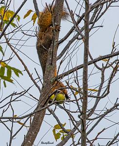 11OCT19 Squirrel-15