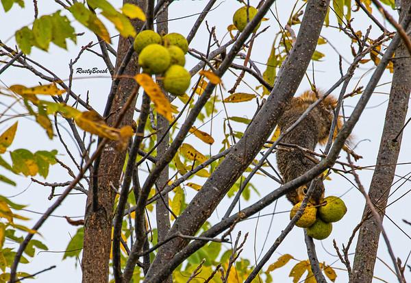 11OCT19 Squirrel-13