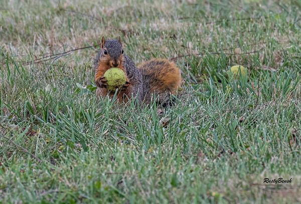 11OCT19 Squirrel-20