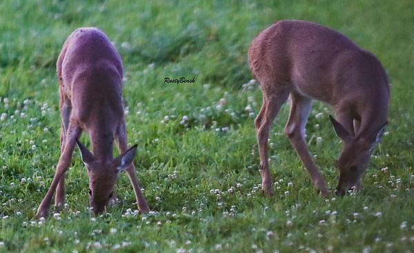 24SEPT21 deer-11