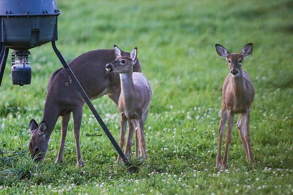24SEPT21 deer-10