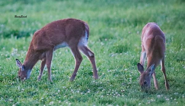 24SEPT21 deer-28